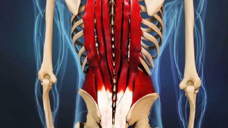 تشخیص و درمان گرفتگی عضلات کمر | بهترین متخصص کایروپراکتیک